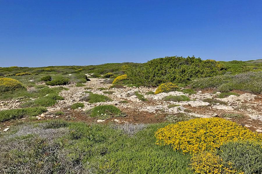 La macchia mediterranea e la varietà di specie botaniche